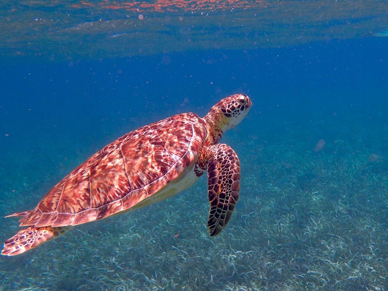 turtle-1958058_1280